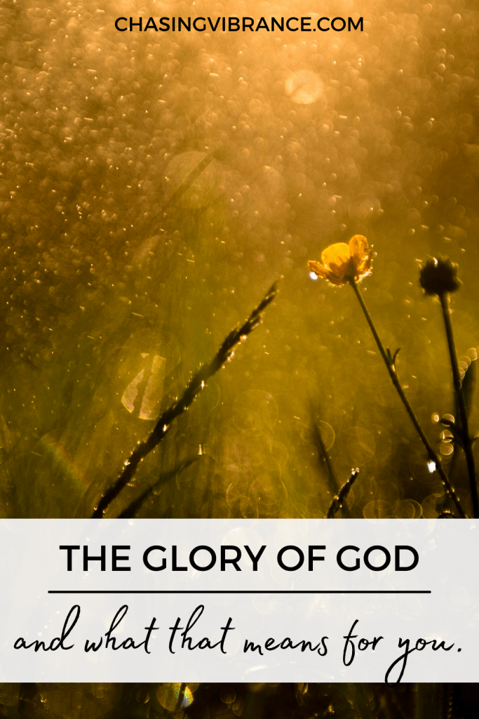 photo of yellow flower at golden hour with text the glory of god and what that means for you at the bottom