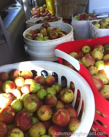 making apple cider