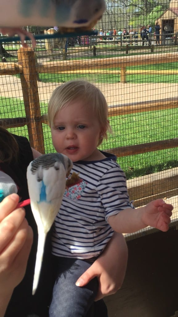 feeding birds at grant's farm