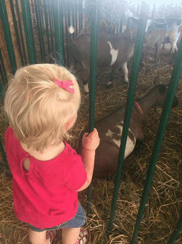 Layla loves goats