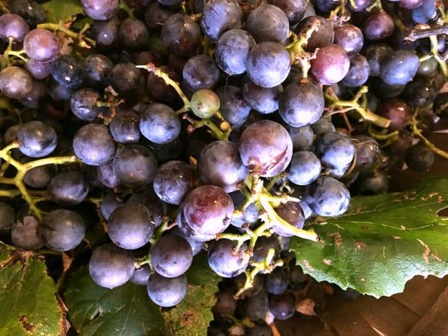 grapes-fresh